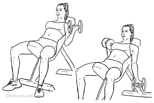 Seated Alternating Incline Bench Dumbbell Curls | WorkoutLabs