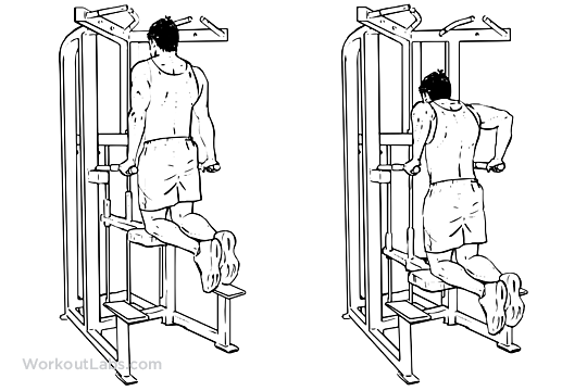 Assisted Tricep Dips | WorkoutLabs