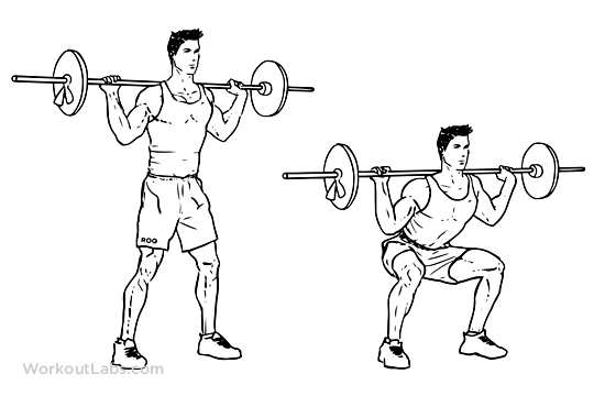 Barbell Squat Illustrated Exercise Guide Workoutlabs