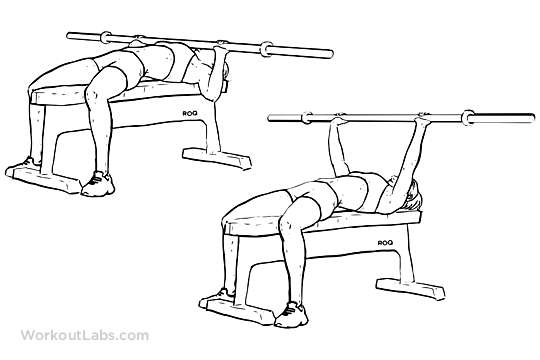Barbell Bench Press Chest Press Workoutlabs