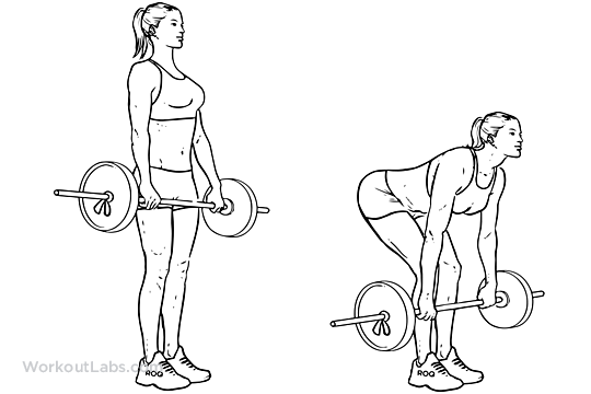 Barbell Deadlift | Illustrated Exercise guide - WorkoutLabs