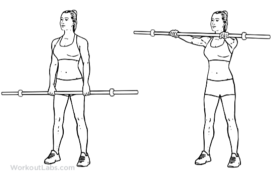 Barbell Front Raise | Illustrated Exercise guide - WorkoutLabs