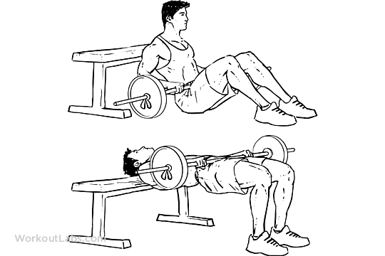 Barbell Hip Thrusts Workoutlabs