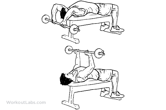 Barbell Pullovers / Lying Chest Overhead Extensions | WorkoutLabs