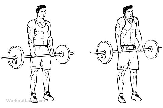 Barbell Shoulder Shrug | Illustrated Exercise guide - WorkoutLabs