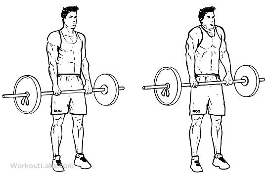 Barbell Shoulder Shrugs | WorkoutLabs