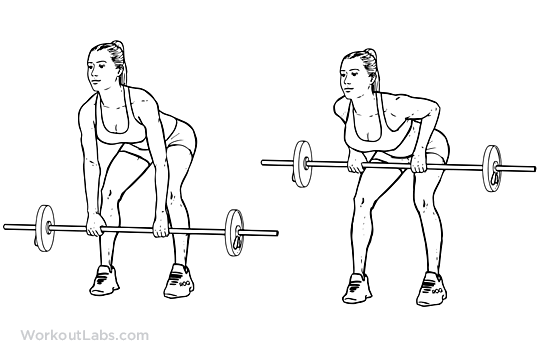 return to exercise guide bent over barbell row primary muscle group    Overhand Barbell Row