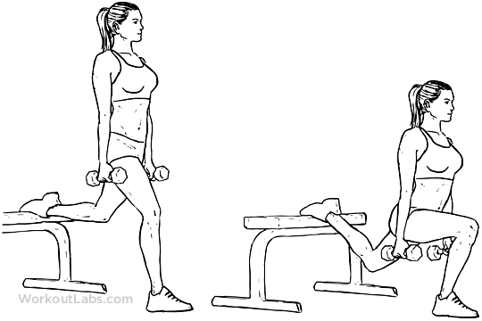 Bulgarian Split Squat | Illustrated Exercise guide ...