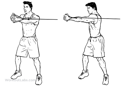 Cable Core Rotation | Illustrated Exercise guide - WorkoutLabs