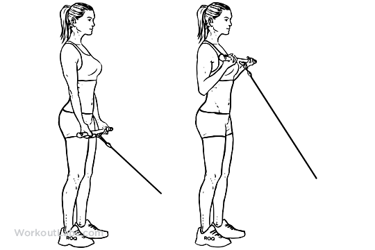 Rope Pulley Curls : Standing bicep cable curls workoutlabs