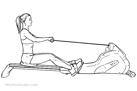 row machine muscles used