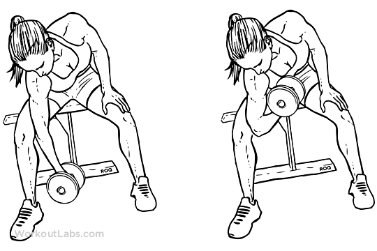 Seated Dumbbell Concentration Curls Illustrated Exercise