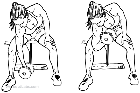 Seated Dumbbell Concentration Curls Workoutlabs