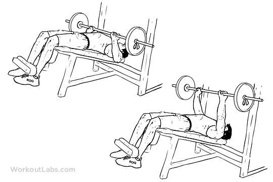 decline barbell bench press illustrated exercise guide