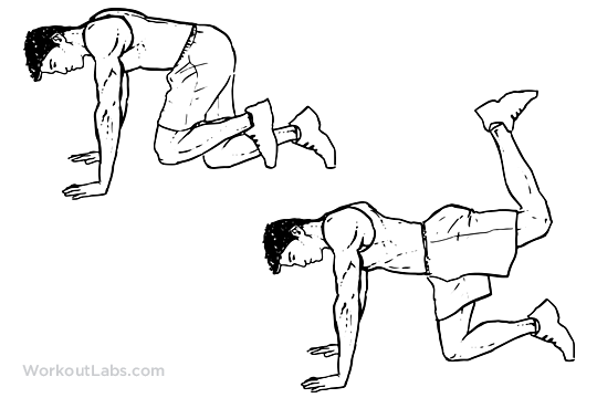 Donkey Kicks Illustrated Exercise Guide Workoutlabs
