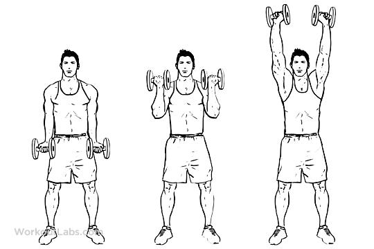Dumbbell Biceps Curl To Shoulder Press Workoutlabs