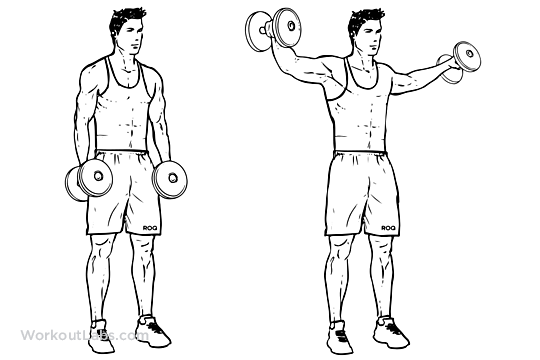 Risultati immagini per lateral raise
