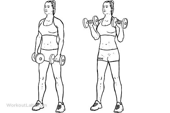 Dumbbell Bicep Reverse Curls | WorkoutLabs
