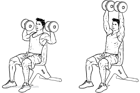 Pictures With The Exercises Workout Template 1