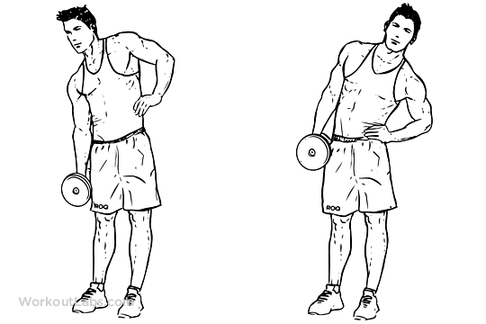 A Dumbbell Side Bend Involves Trunk Lateral Flexion Where You Your Sideways