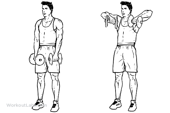 Upright Dumbbell Row | Illustrated Exercise guide ...