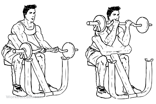 Ez Bar Preacher Curl Illustrated Exercise Guide