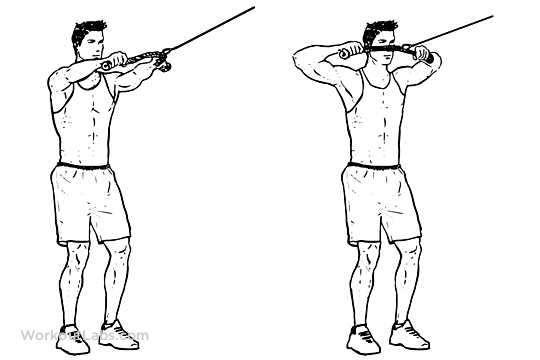 Face pull rear delt pull illustrated exercise guide for Floor underhand cable fly