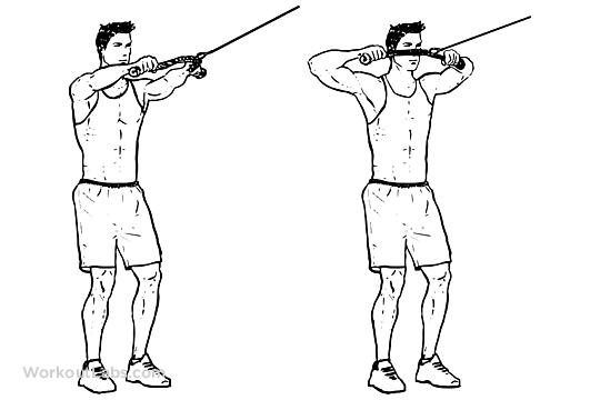 Face Pull / Rear Delt Pull | WorkoutLabs