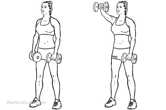 Forward Front Dumbbell Raise Illustrated Exercise