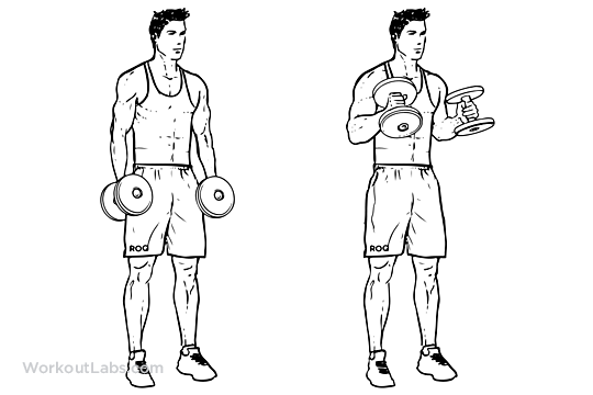 Dumbbell Hammer Curls for Biceps,Best Biceps Exercise,Wokout ...