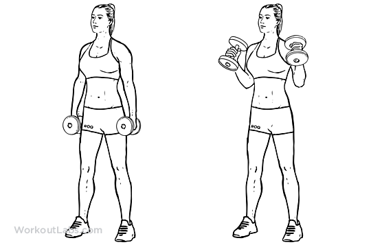 ... forearms equipment dumbbells stand straight holing a dumbbell in