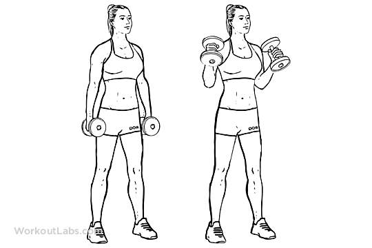 Hammer Curls vs Bicep Curls: Is One Better Than The Other?