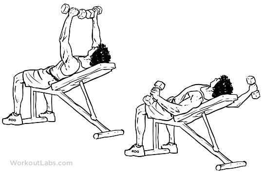 Incline Bench Dumbbell Fly | Illustrated Exercise guide ...