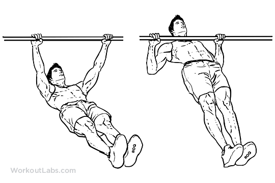 Inverted Rows / Reverse Pull-ups | WorkoutLabs