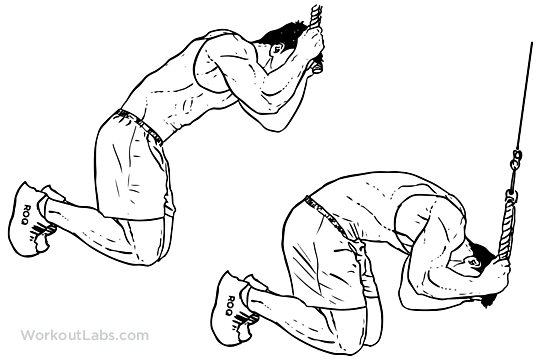 Kneeling Cable Crunch Illustrated Exercise Guide
