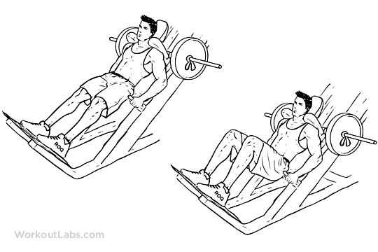 Machine Hack Squat | Illustrated Exercise guide - WorkoutLabs