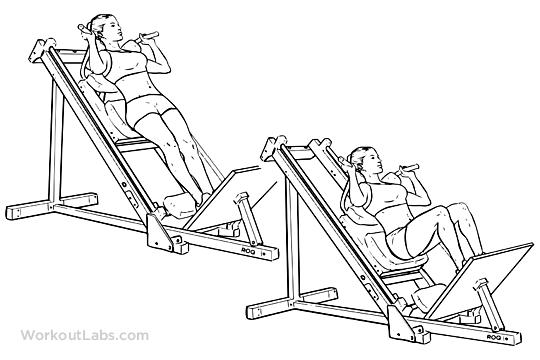 Machine Hack Squats | WorkoutLabs