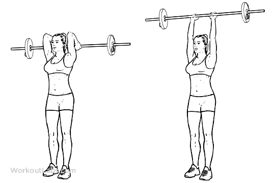 Overhead Barbell Triceps Extension Ilrated Exercise Guide Workoutlabs