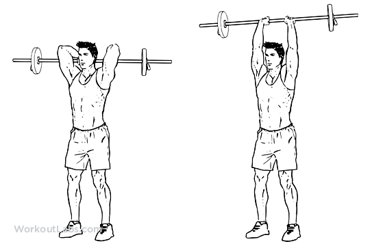 Overhead Barbell Triceps Extension Illustrated Exercise