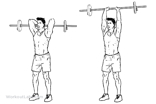 Standing Overhead Barbell Triceps Extensions | WorkoutLabs