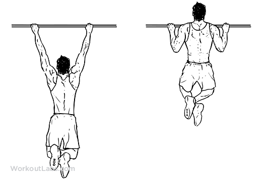 Pull-up | Illustrated Exercise guide - WorkoutLabs