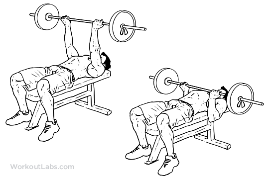 Reverse Triceps Bench Press Illustrated Exercise Guide
