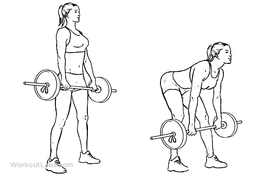 Romanian Deadlift | Illustrated Exercise guide - WorkoutLabs
