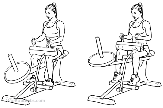 sitting calf raise machine