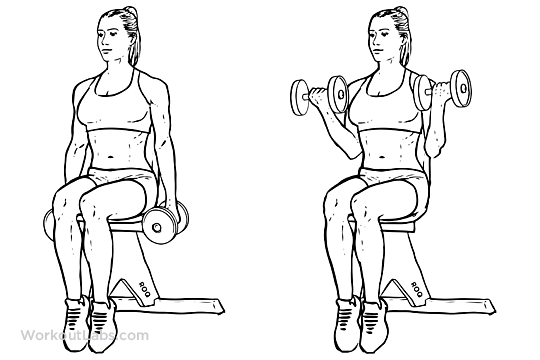 Seated Dumbbell Bicep Curls Workoutlabs