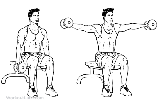 Seated Lateral Side Shoulder Dumbbell Raises Workoutlabs