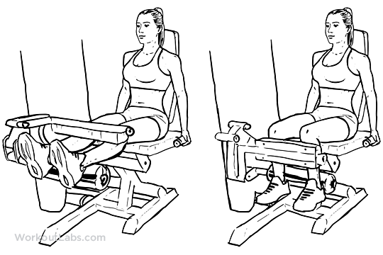 Seated_Leg_curl1.png