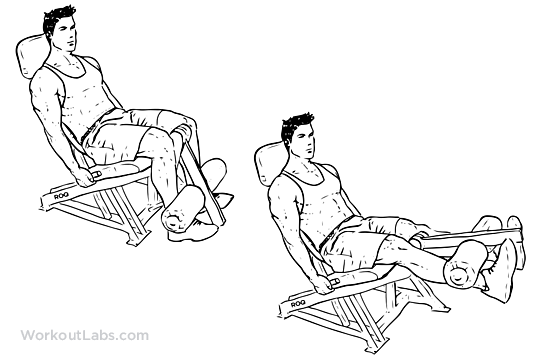 Seated Machine Leg Extensions | Illustrated Exercise guide ...