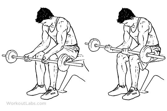 Upper Back Workouts Women Seated Palm-Up Wrist C...