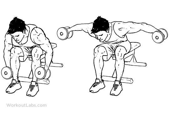 Seated Bent Over Rear Delt Raise Illustrated Exercise